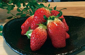 神戸市北区の八多いちごなど 菜々cafeでは地元の新鮮野菜や 三田ポークなど地元の食材を 使って調理しています